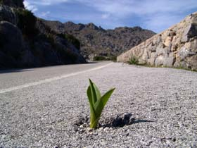 sprout-in-road